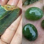 Batu Akik Lumuik