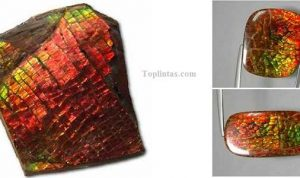 Jenis Batu Permata Ammolite