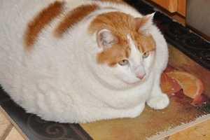 Kucing Meow