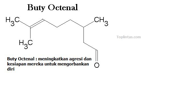 Buty Octenal