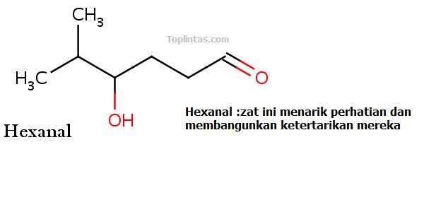 hexanal
