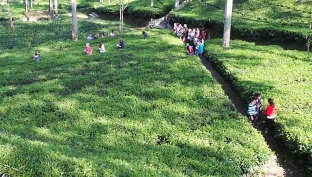 Tempat Wisata di Kabupaten Wonosobo Selain Dieng Plateau 12 Tempat Wisata di Kabupaten Wonosobo Selain Dieng Plateau