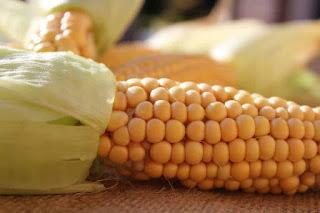 Manfaat air rebusan jagung untuk ibu hamil  Manfaat Air Rebusan Jagung untuk Ibu Hamil, Sungguh Menakjubkan !!