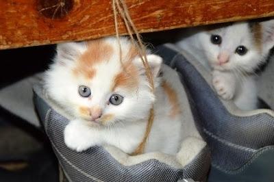 Kucing termasuk binatang piaraan yang cukup banyak digemari oleh masyarakat mulai dari anak k Bahaya Kucing Bagi Ibu Hamil dan Pencegahannya