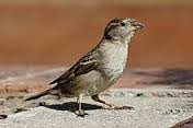 Kali ini saya mau membuatkan postingan ihwal fakta binatang lagi gan 10 Fakta Burung Yang Menakjubkan