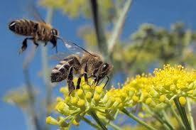 Kalian tahu kan bahwa hubungan bunga dan lebah itu sangat bersahabat alasannya yakni mereka saling membut Ternyata Bunga Juga Bisa Membahayakan Lebah