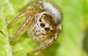 Pestisida ialah zat yang biasa dipakai petani untuk Bahaya, Pestisida Ternyata Dapat Merubah Perilaku Laba-laba